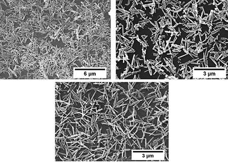 Images MEB de nanonets de ZnO, travaux réalisée par Thomas Demes-Causse, étudiant en thèse